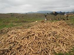Quyết định công bố Tiêu chuẩn quốc gia về mặt hàng Tinh bột sắn